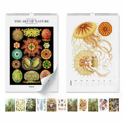 Wandkalender  Ernst Haeckel, The Art Of Nature 2021 - Ernst Haeckel