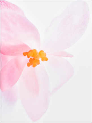 Premium-Poster  Orchidee in Pink I - Magda Izzard