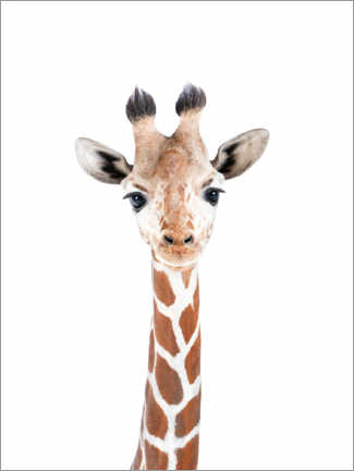 Gallery Print  Baby-Giraffe - Sisi And Seb