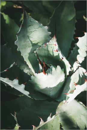 Premium-Poster Silber Agave