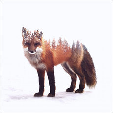 Gallery Print  Fuchs - Peg Essert