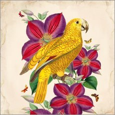 Wandsticker  Oh My Parrot V - Mandy Reinmuth
