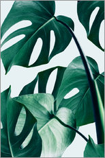 Wandsticker  Monstera - Uma 83 Oranges
