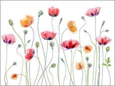 Wandaufkleber  Papaver Partei - Mandy Disher