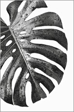 Forex  Schwarze Monstera 01 - Art Couture