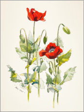 Poster  Mohnblumen Aquarell - Mary Want