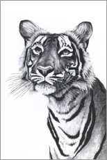 Gallery Print  Tiger-Portrait - Rose Corcoran