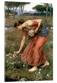 Acrylglasbild  Narzisse - John William Waterhouse