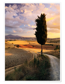 Poster  Abend im Val d'Orcia, Toskana - Matteo Colombo