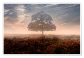 Premium-Poster New Forest