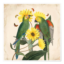 Poster  Oh My Parrot II - Mandy Reinmuth