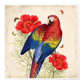 Premium-Poster  Oh My Parrot III - Mandy Reinmuth