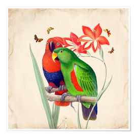 Premium-Poster  Oh My Parrot I - Mandy Reinmuth