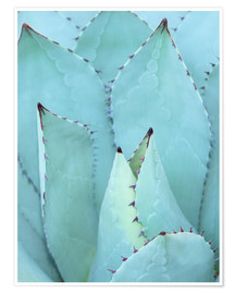 Poster  Agave