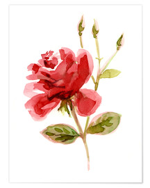 Poster Rote Rose