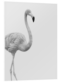 Forex  Flanierender Flamingo - Finlay and Noa