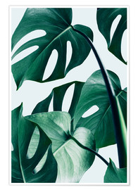 Poster  Monstera - Uma 83 Oranges