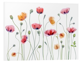 Hartschaumbild  Poppy Party - Mandy Disher