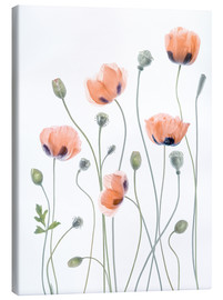 Leinwandbild  Poppy Poesie - Mandy Disher