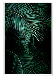 Premium-Poster Palm Leaves 9