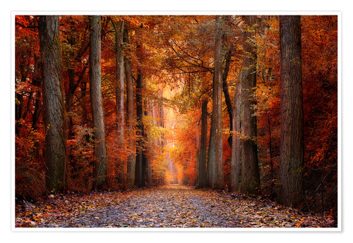 Premium-Poster Red Forest
