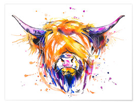 Poster  Scottish Highland Cow - Zaira Dzhaubaeva
