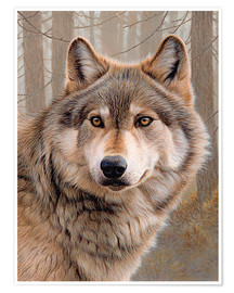 Poster  Nord-Amerikanischer Wolf - Ikon Images