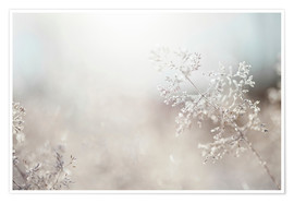 Poster  Close up of backlit frost ice crystals on wavy hair-grass (deschampsia flexuosa) - Cultura/Seb Oliver